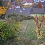 Rebberg Steimeten Dornach