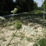 Fläche Gasleitung IWB Widen Arlesheim