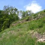 Rebberg im Steinbruch Arlesheim