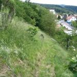 Grünflächenmanagement