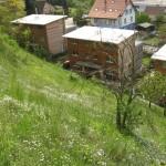 Pflegeprogramm Freihaltezone Dornach