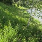 Wiesenufer Basel
