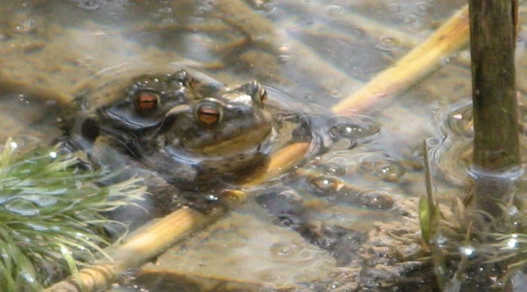 Biotopschutz, Artenförderung